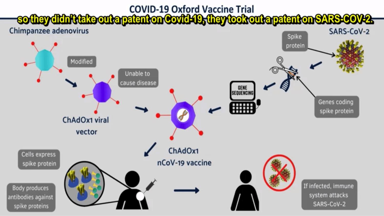 ChAdOx1 n-Cov-19 Oxford Vaccine Trial.png